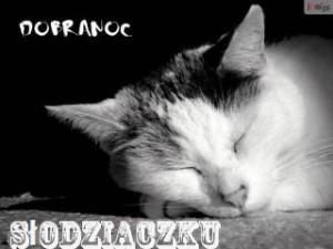 dobranoc_koteczku_kotki