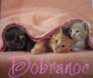 noc+kittens