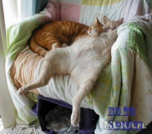 siesta-koty-lezy